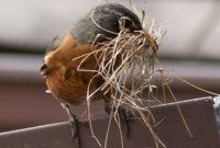 Bird Build a Nest