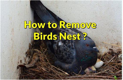 Removing Birds Nest